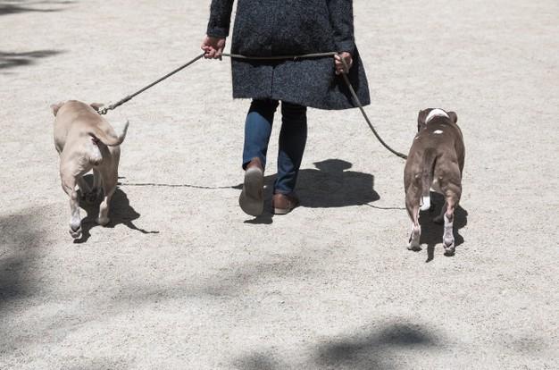 Paseando perros ancianos
