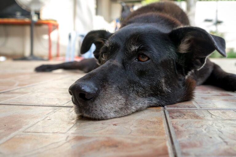 Cara de perro viejo
